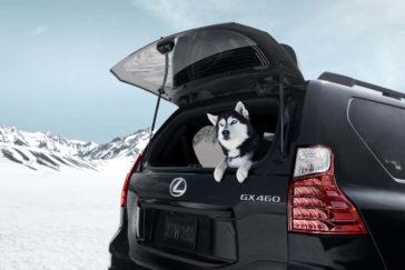 2022 Lexus GX