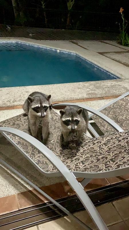 Animals-in-Costa-Rica